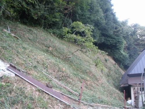 裏山の草刈
